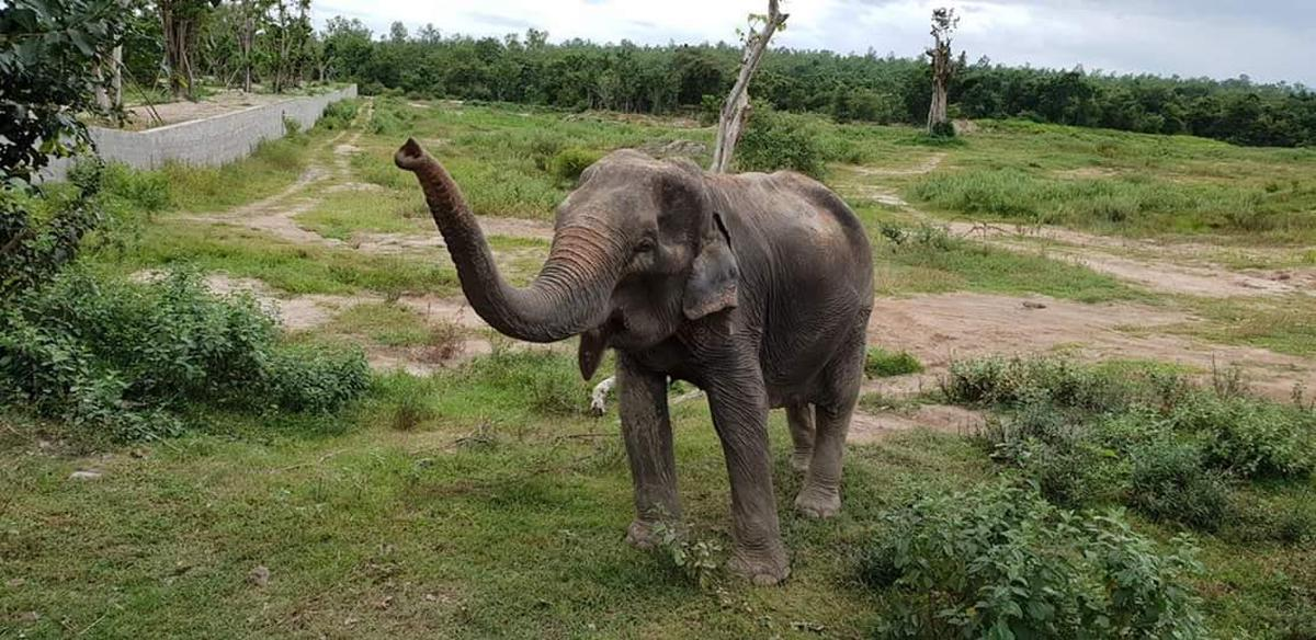 Elephant Care Day at Wildlife Friends Foundation