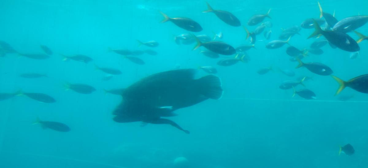 Great Barrier Reef Adventures by Cruise Whitsundays from