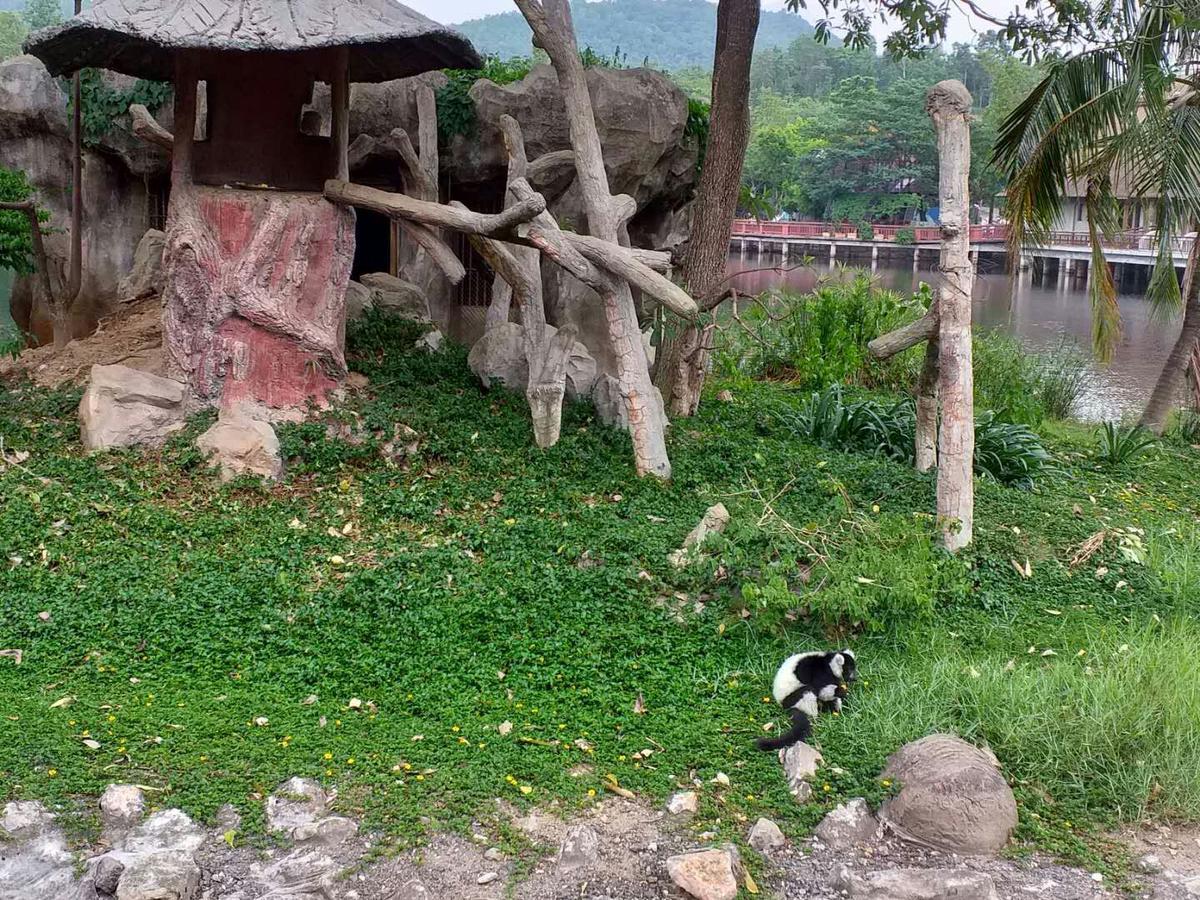 Chiang Mai Night Safari Park - Klook