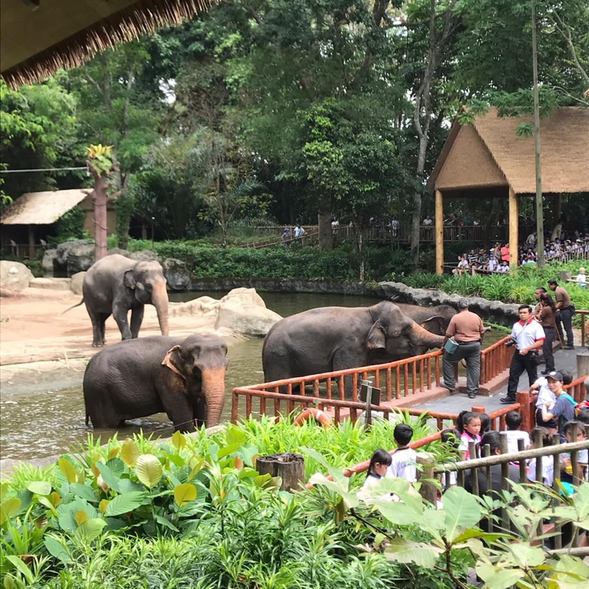 Singapore Zoo Ticket - The world-famous 'open concept' Zoo - Klook