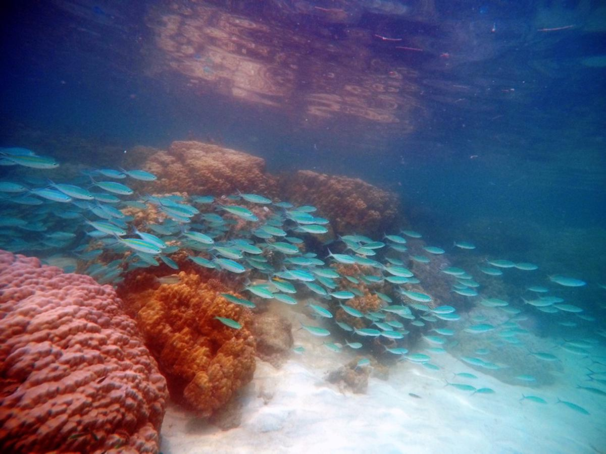 Koh Rong Samloem Snorkeling and Diving Experience from