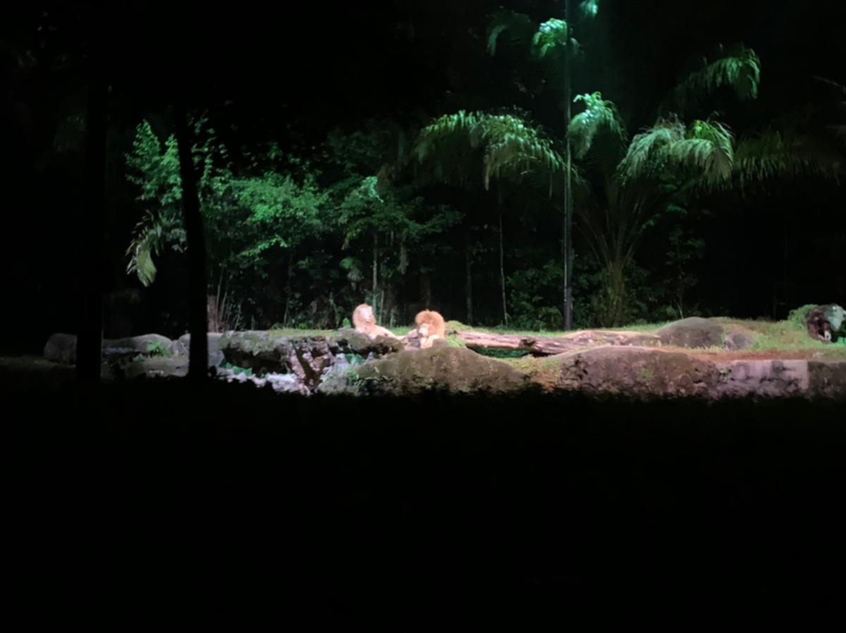 Singapore Night Safari Open Date Tickets - Klook