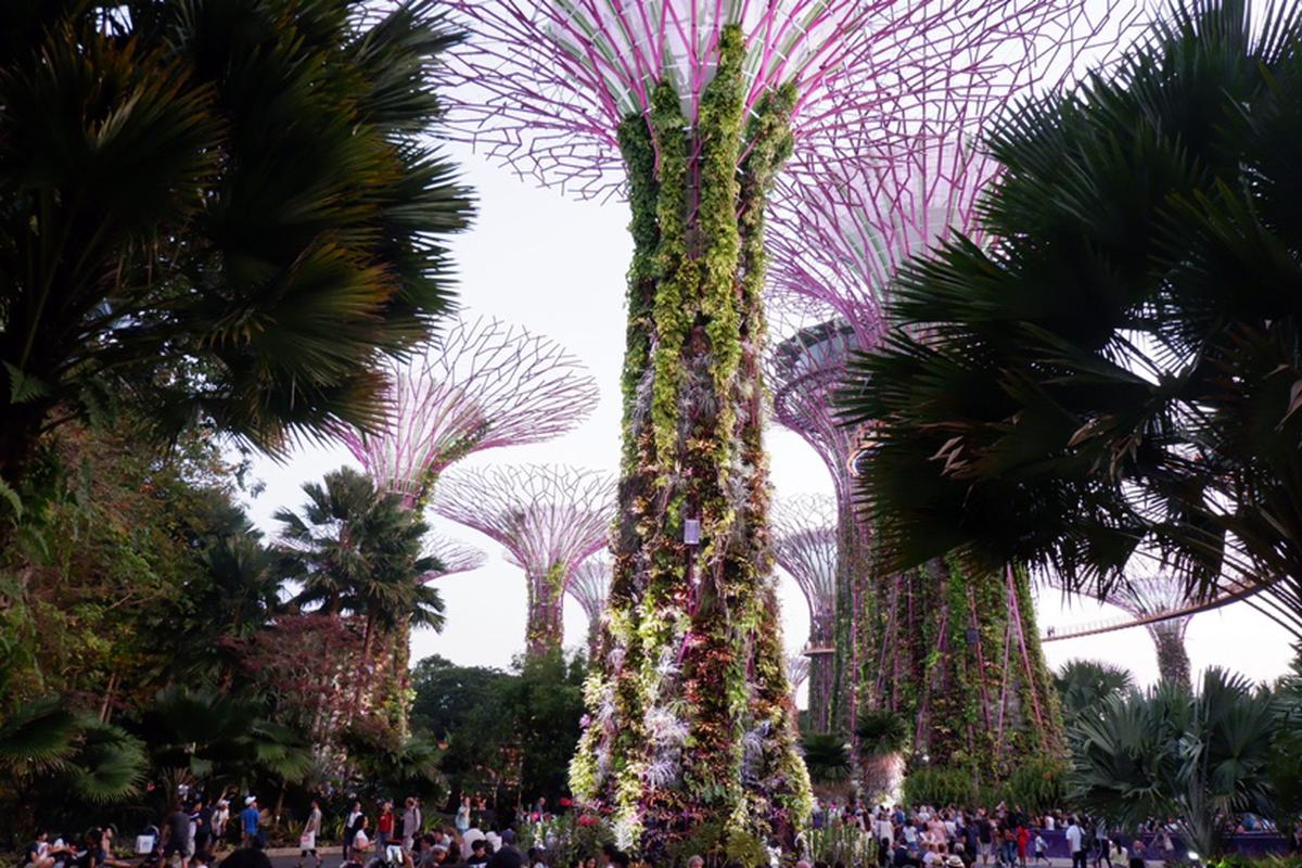 Singapore Gardens by the Bay Tickets (Cloud Forest & Flower