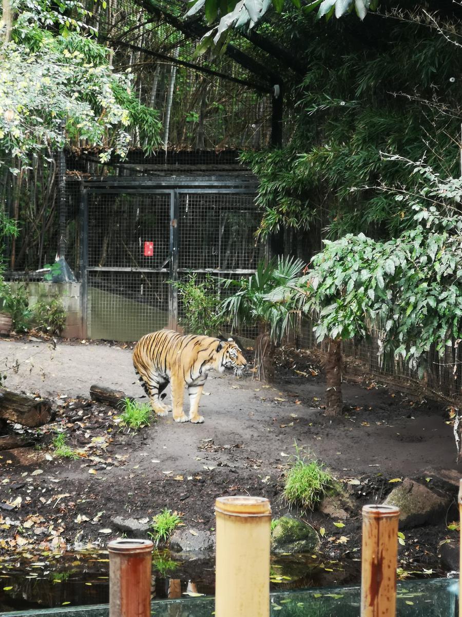 Melbourne Zoo Discount Ticket - Klook