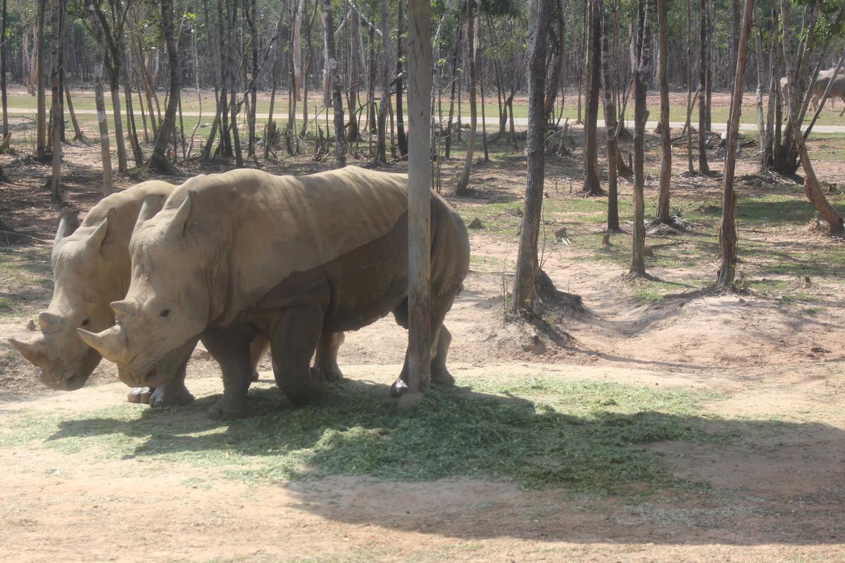 Một cặp tê giác tại khu bảo tồn Safari
